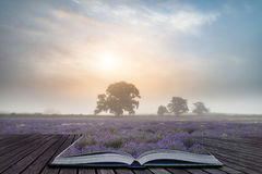 Beautiful dramatic misty sunrise landscape over lavender field i Royalty Free Stock Photography