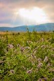 Beautiful dramatic nature Stock Photography