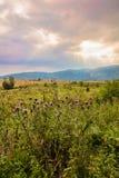 Beautiful dramatic nature Stock Photo