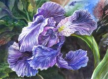 Iris flower in a violet and lilac colors. Beautiful drawn iris flower against the background of greens stock illustration