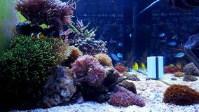 Beautiful dream coral reef aquarium tank. Tropical and exotic reef aquarium Stock Photos