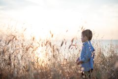 Beautiful dreaming little boy in a shirt among the plant field. Beautiful little boy in a shirt among field of spikes on the sea background Royalty Free Stock Photography