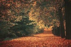 Beautiful dreamy autumn forest Stock Photo