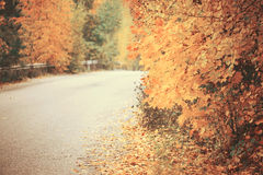 Beautiful dreamy autumn forest with walkiing path Royalty Free Stock Images