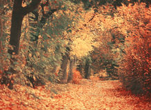 Beautiful dreamy autumn forest with walkiing path Royalty Free Stock Photo