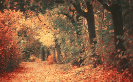 Beautiful dreamy autumn forest with walkiing path Royalty Free Stock Photos