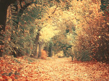 Beautiful dreamy autumn forest with walkiing path Stock Images