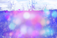 Beautiful dreamy background with meadow and bokeh lights Royalty Free Stock Photography