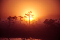 A beautiful, dreamy morning scenery of sun rising above a misty marsh. Colorful, artistic look. Stock Images