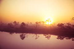 A beautiful, dreamy morning scenery of sun rising above a misty marsh. Colorful, artistic look. Royalty Free Stock Images