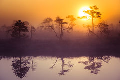 A beautiful, dreamy morning scenery of sun rising above a misty marsh. Colorful, artistic look. Vibrant swamp landscape in North Europe Stock Photos