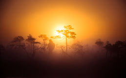A beautiful, dreamy morning scenery of sun rising above a misty marsh. Colorful, artistic look. Stock Image