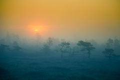 A beautiful, dreamy morning scenery of sun rising in a misty swamp. Royalty Free Stock Photos