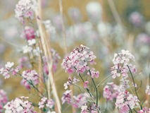 Beautiful dreamy red pink wild flowers, blurry background Stock Image