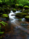 A beautiful dreamy Scottish stream.  Royalty Free Stock Photo