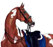 Sport dressage horse. Beautiful dressage horse in sports ammunition royalty free illustration