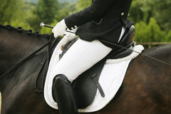 Beautiful dressage sport horse during competition with rider. Unknown rider riding on a dressage horse Royalty Free Stock Photo