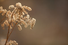 Beautiful the dried flower. On a neutral background Stock Photos