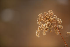 Beautiful the dried flower. On a neutral background Royalty Free Stock Photos