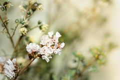 Beautiful dried flowers on bright background blur. royalty free stock images