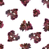 Beautiful dried red dark roses like as background is isolated on Royalty Free Stock Photos