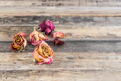 Beautiful dried roses on wooden background Stock Image