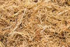 Beautiful dried sphagnum moss. Royalty Free Stock Photography
