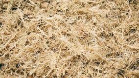 Beautiful dried sphagnum moss. Macro shot stock video footage