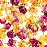 Beautiful dried yellow and pink roses like as background is isol Royalty Free Stock Image