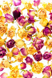 Beautiful dried yellow and pink roses like as background is isol Stock Photo