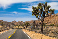 Beautiful drive through the Mojave Desert. Road through Joshua Tree National Park, California Stock Photo