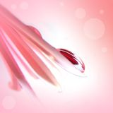 Beautiful drop on pink gerbera Stock Image