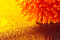 Beautiful drops of water and orange flower. Beautiful drops of water close to the orange flower Royalty Free Stock Images