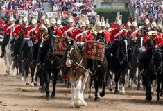 Beautiful drum horse with Household Cavalry behind, taking part in the Trooping the Colour ceremony, London UK. Drum horse with Household Cavalry behind, taking stock photography