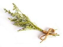 Beautiful dry flower Stock Photo