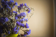 Beautiful dry flowers royalty free stock photography