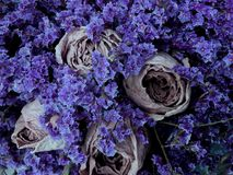 Beautiful dry flowers vintage background. Bouquet of Royalty Free Stock Photography