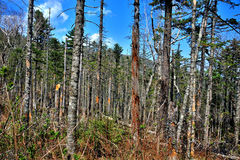 Beautiful dry forest landscape Royalty Free Stock Photography