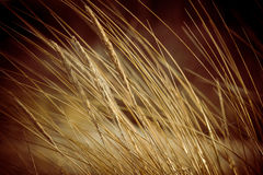 Beautiful dry grass and bent background - 80's retro vintage Royalty Free Stock Photo