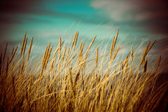 Beautiful dry grass and bent background - 80's retro vintage Royalty Free Stock Image