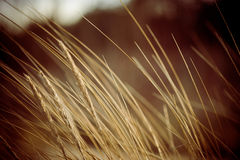 Beautiful dry grass and bent background - 80's retro vintage Royalty Free Stock Photography