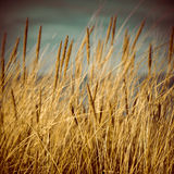 Beautiful dry grass and bent background - 80's retro vintage Royalty Free Stock Images