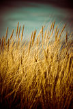 Beautiful dry grass and bent background - 80's retro vintage Royalty Free Stock Photos