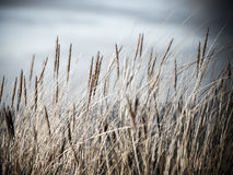 Beautiful dry grass and bent background - vintage retro Royalty Free Stock Photo