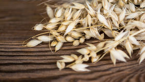 Beautiful dry oat on a wooden table. Decorative detail of cereal spikes on brown vintage background stock images