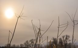 Beautiful dry plants with the sun at the background stock image