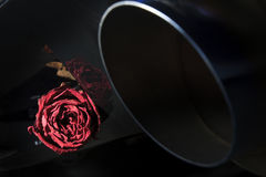 beautiful dry red rose on back diffuser sport ca Stock Photo