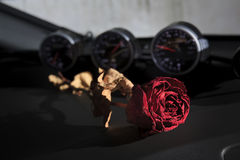beautiful dry red rose on sport car console Stock Images