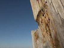 Beautiful dry tree trunk against the blue sky.wooden structure stock photos