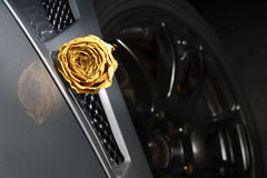 beautiful dry white rose on side diffuser sport car Royalty Free Stock Image
